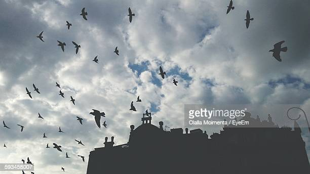Low Angle View Of Silhouette Birds Flying Over Building