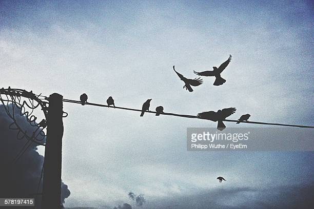 Low Angle View Of Silhouette Birds On Electricity Pylon Against Sky