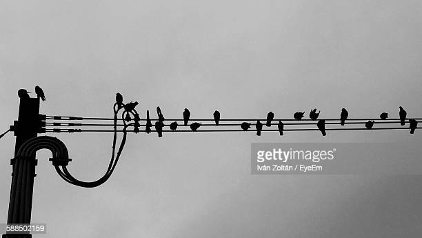 Low Angle View Of Silhouette Birds On Electricity Pylons