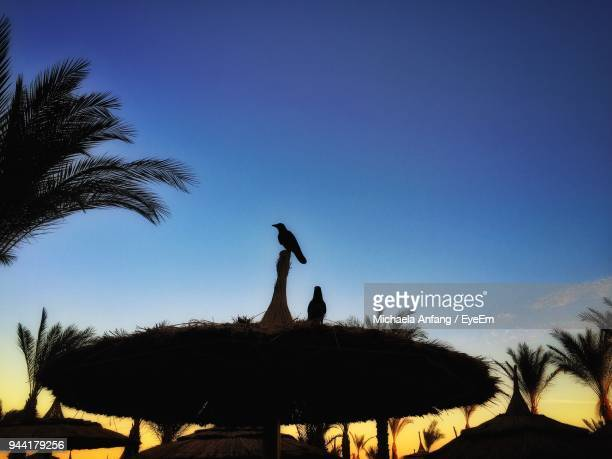 low angle view of silhouette birds on parasol against blue sky - anfang stock pictures, royalty-free photos & images