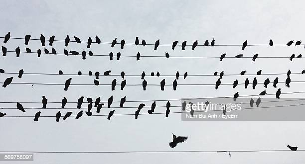 Low Angle View Of Silhouette Birds On Power Lines Against Sky