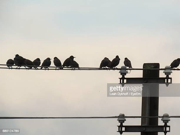 low angle view of silhouette birds perching against clear sky - leah wilde stock-fotos und bilder
