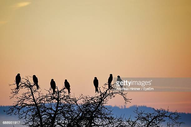 Low Angle View Of Silhouette Birds Perching On Bare Tree Against Sky During Sunset