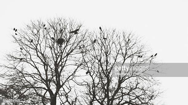 Low Angle View Of Silhouette Birds Perching On Bare Trees Against Clear Sky