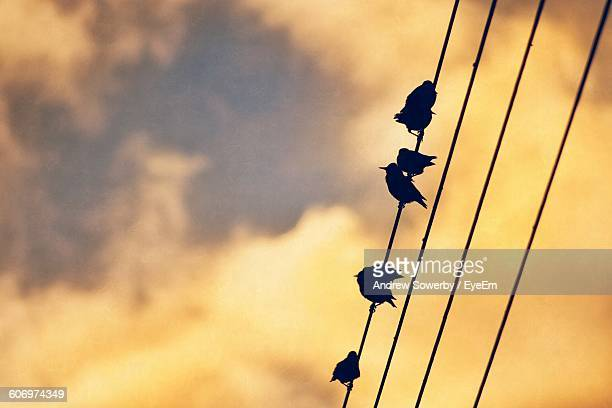 Low Angle View Of Silhouette Birds Perching On Cable During Sunset