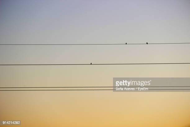 Low Angle View Of Silhouette Birds Perching On Cables Against Clear Sky During Sunset