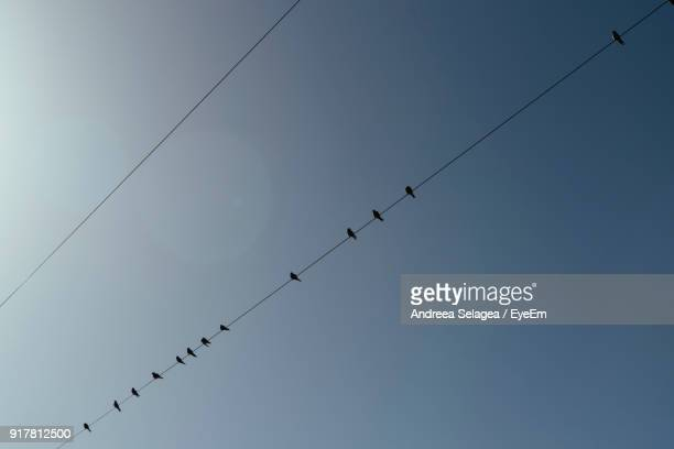 Low Angle View Of Silhouette Birds Perching On Cables Against Clear Sky