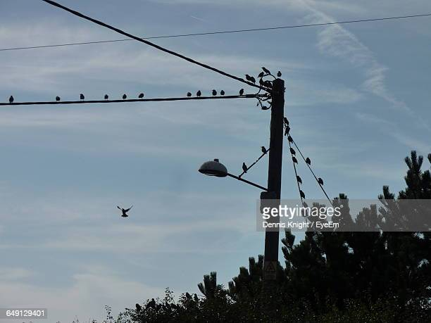 Low Angle View Of Silhouette Birds Perching On Power Lines Against Sky At Dusk