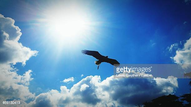 Low Angle View Of Silhouette Eagle Flying Against Blue Sky