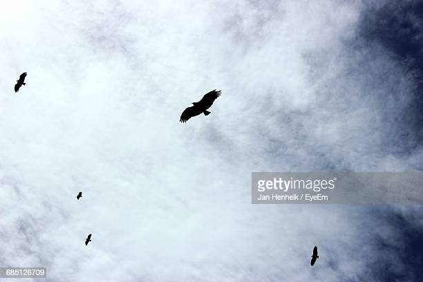 low angle view of silhouette eagle flying mid air against cloudy sky - hovering stock pictures, royalty-free photos & images