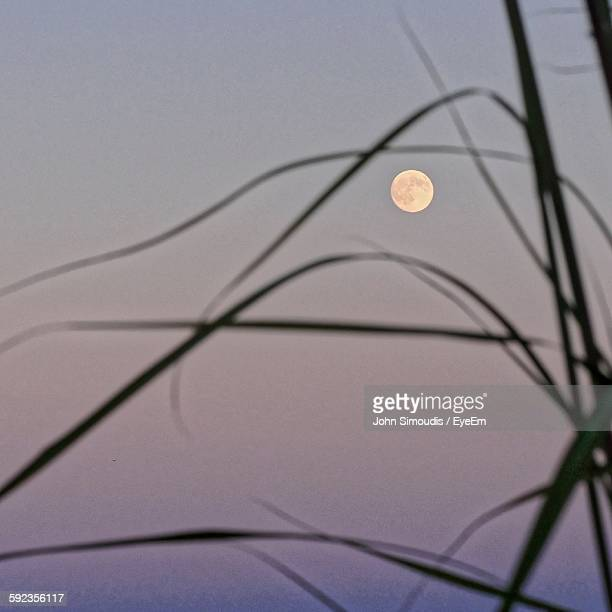 Low Angle View Of Silhouette Grass Against Full Moon At Dusk