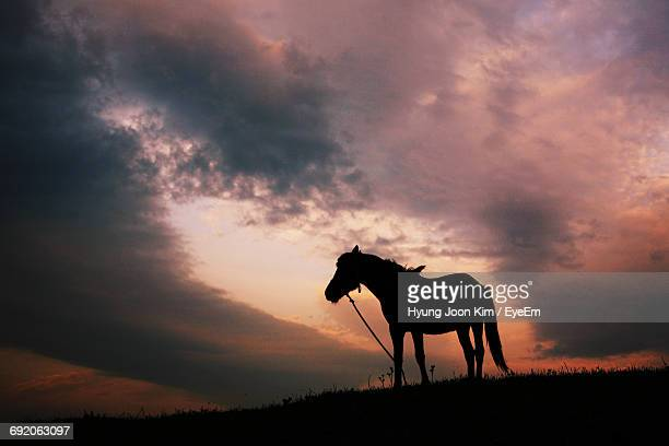 low angle view of silhouette horse standing on hill against cloudy sky during sunset - herbivorous stock photos and pictures