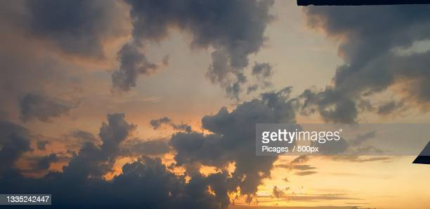 low angle view of silhouette of trees against sky during sunset,chandigarh,india - chandigarh stock pictures, royalty-free photos & images