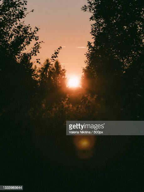 low angle view of silhouette of trees against sky during sunset - nikitina stock pictures, royalty-free photos & images