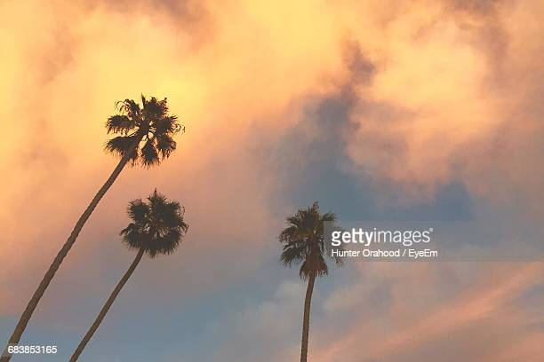 Low Angle View Of Silhouette Palm Tree Against Cloudy Sky