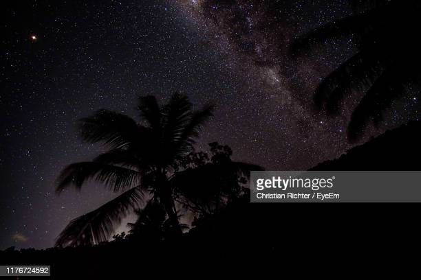 "low angle view of silhouette palm tree against sky at night - ""christian richter"" stock pictures, royalty-free photos & images"