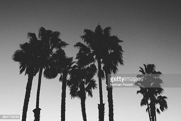 Low angle view of silhouette palm trees against clear sky at dusk
