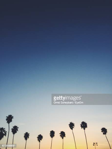 Low Angle View Of Silhouette Palm Trees Against Clear Sky During Sunset