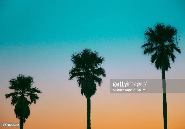 Low Angle View Of Silhouette Palm Trees Against Clear Sky