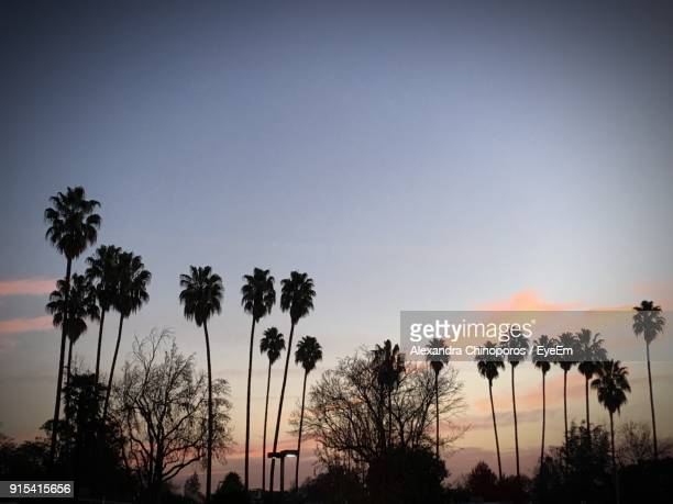 low angle view of silhouette palm trees against clear sky - palo alto stock pictures, royalty-free photos & images