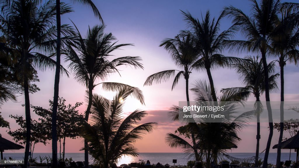 Low Angle View Of Silhouette Palm Trees Against Clear Sky : Stock-Foto