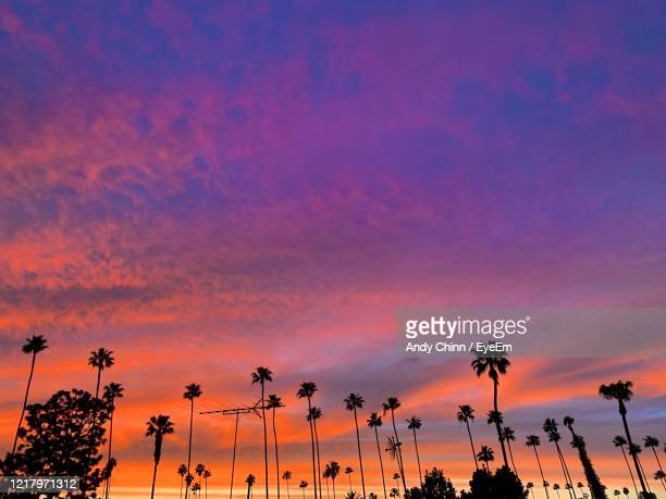 low angle view of silhouette palm trees against dramatic sky - hollywood los angeles stock-fotos und bilder