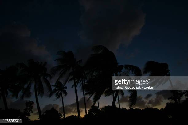 low angle view of silhouette palm trees against sky at night - miami stock pictures, royalty-free photos & images