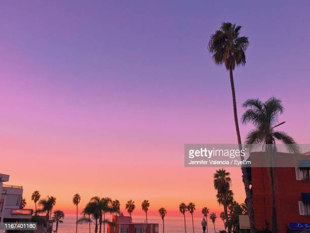 low angle view of silhouette palm trees against sky at sunset - palm tree stock pictures, royalty-free photos & images