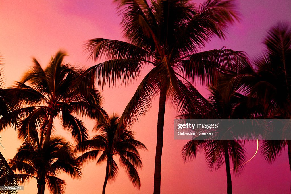 Low angle view of silhouette palm trees against sky during sunset : Stock Photo