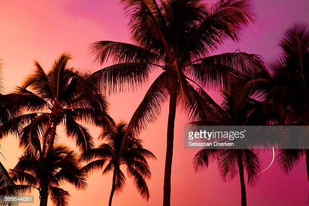 low angle view of silhouette palm trees against sky during sunset - palm tree stock pictures, royalty-free photos & images
