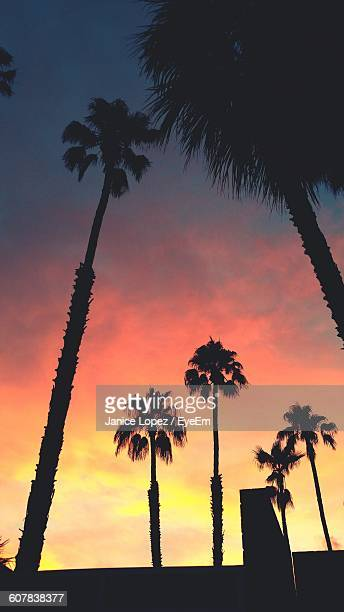 low angle view of silhouette palm trees against sky during sunset - lopez stock pictures, royalty-free photos & images