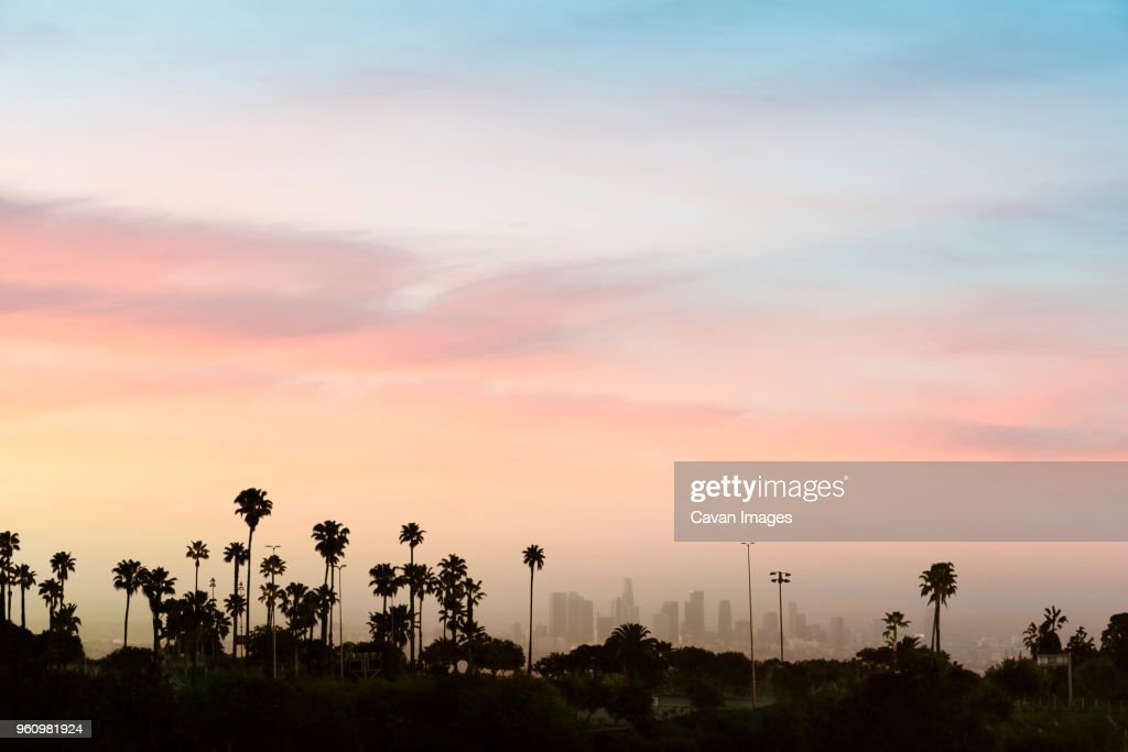 Low angle view of silhouette palm trees against sky in city during sunset : Stock Photo