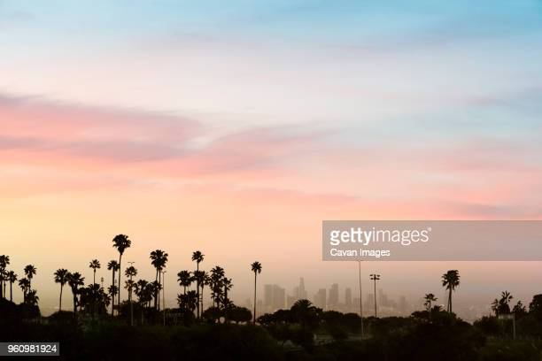 low angle view of silhouette palm trees against sky in city during sunset - skyline photos et images de collection