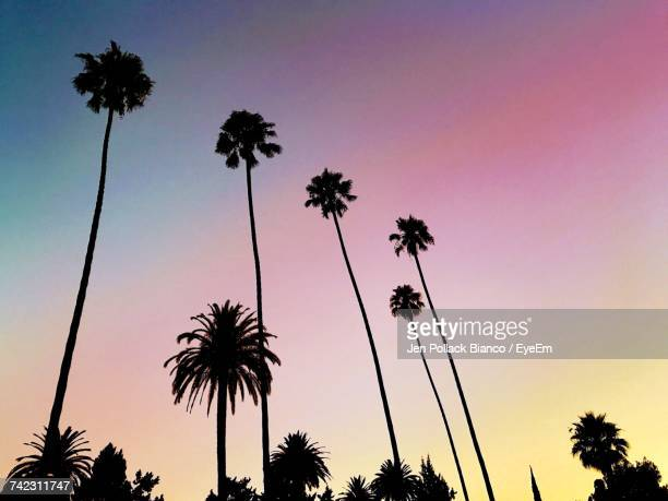 low angle view of silhouette palm trees against sky - califórnia imagens e fotografias de stock