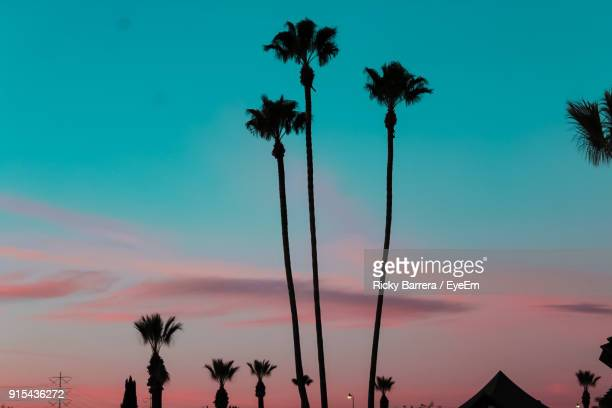 low angle view of silhouette palm trees against sky - sacramento stock pictures, royalty-free photos & images