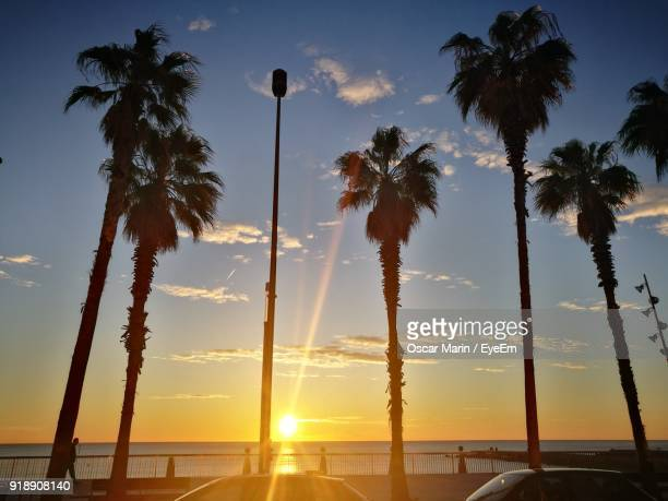 low angle view of silhouette palm trees against sky - oscar marin stock photos and pictures