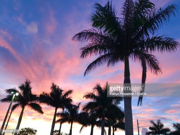 low angle view of silhouette palm trees against sky - ウェストパームビーチ ストックフォトと画像