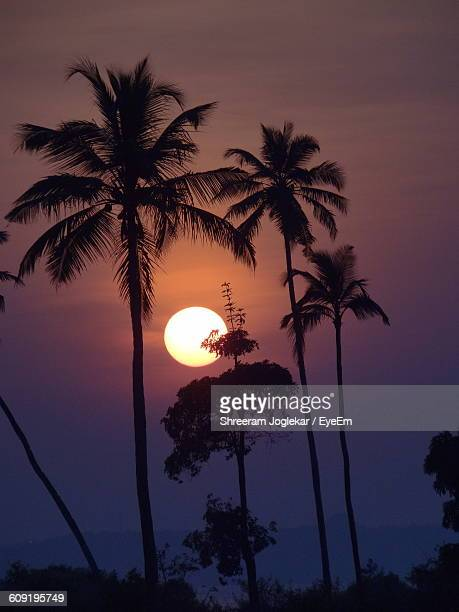 Low Angle View Of Silhouette Palm Trees At Sunset