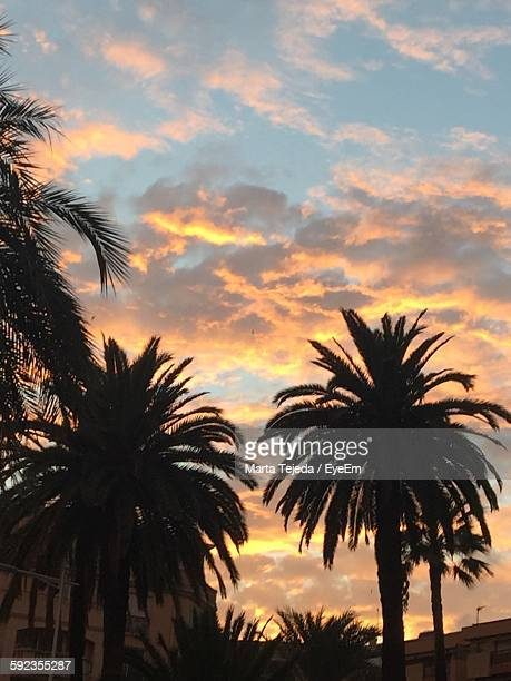 low angle view of silhouette palm trees growing against sky during sunset - tejeda fotografías e imágenes de stock