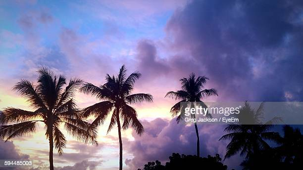 Low Angle View Of Silhouette Palm Trees Growing Against Sky During Sunset