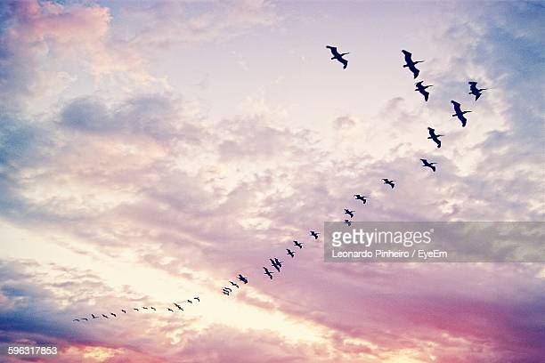 low angle view of silhouette pelicans flying against sunset sky - pájaro fotografías e imágenes de stock