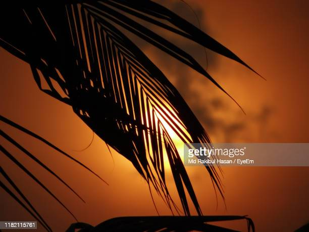 low angle view of silhouette plant against sky at sunset - md rakibul hasan stock pictures, royalty-free photos & images