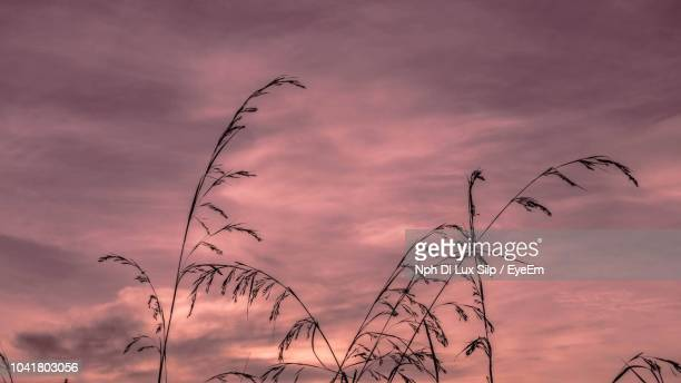 Low Angle View Of Silhouette Plants Against Dramatic Sky