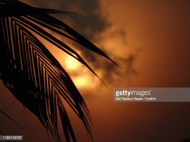 low angle view of silhouette plants against orange sky - md rakibul hasan stock pictures, royalty-free photos & images