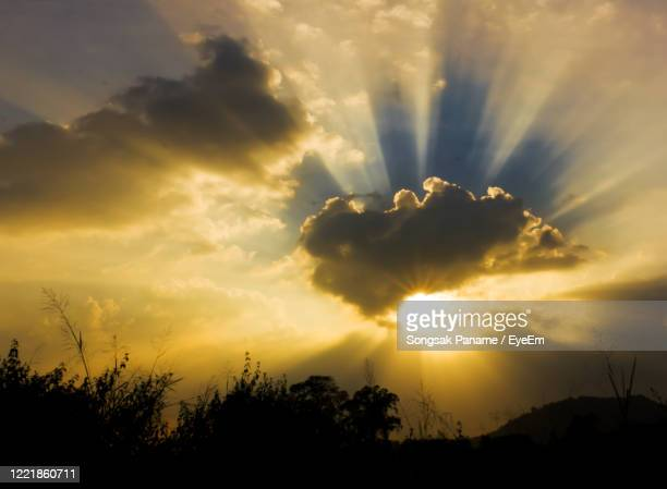 low angle view of silhouette plants against sky during sunset - appearance stock pictures, royalty-free photos & images