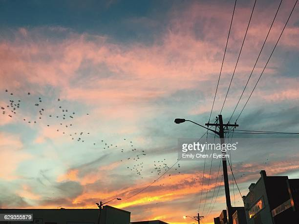 Low Angle View Of Silhouette Street Light Against Birds Flying In Sky During Sunset