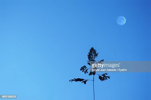Low Angle View Of Silhouette Tree Against Clear Blue Sky