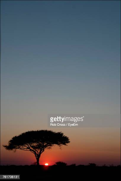 Low Angle View Of Silhouette Tree Against Clear Sky At Sunset