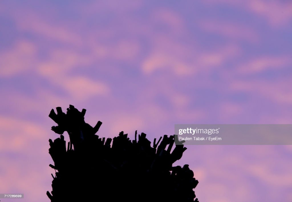 Low Angle View Of Silhouette Tree Against Dramatic Sky : Stockfoto