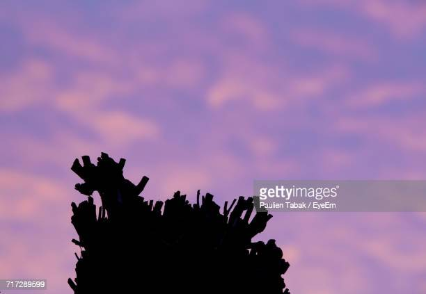 low angle view of silhouette tree against dramatic sky - paulien tabak stock pictures, royalty-free photos & images